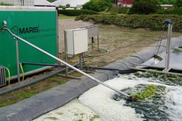 Maris Projects - algen